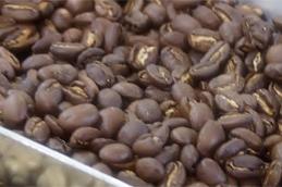 케냐 커피빈